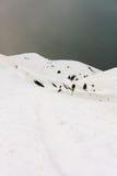 śnieżyca Fotografia Royalty Free