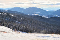 Śnieżyca na wzgórzu blisko sosnowego lasu Obraz Stock