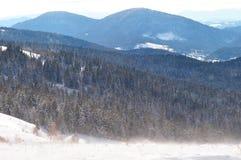 Śnieżyca na wzgórzu blisko sosnowego lasu Zdjęcie Royalty Free