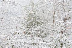 Śnieżyca w Chattahoochee lesie państwowym zdjęcie royalty free