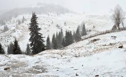 Śnieżyca w górach. Zdjęcie Royalty Free