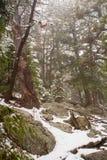 Śnieżyca w górach Zdjęcia Royalty Free