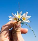 Śnieżyczka kwiat w ręce na nieba tle Zdjęcia Stock
