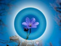 Śnieżyczka w halo wiosenne tła piękna ilustracyjny wektora obrazy stock