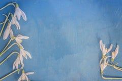 Śnieżyczka - wiosna biały kwiat na błękitnym drewnianym tle z miejscem dla teksta fotografia stock
