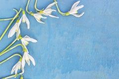 Śnieżyczka - wiosna biały kwiat na błękitnym drewnianym tle z miejscem dla teksta zdjęcie stock
