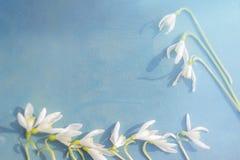 Śnieżyczka - wiosna biały kwiat na błękitnym drewnianym tle z miejscem dla teksta obraz stock