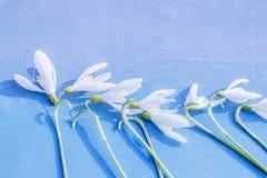 Śnieżyczka - wiosna biały kwiat na błękitnym drewnianym tle z miejscem dla teksta zdjęcia royalty free