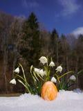 Śnieżyczki r out śnieg z Easter jajkami Fotografia Stock