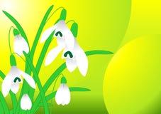 śnieżyczki wiosna wektor Fotografia Stock