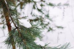 Śnieżysta gałąź przy zmierzchem Zdjęcie Stock