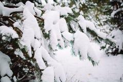 Śnieżysta gałąź przy zmierzchem Obrazy Royalty Free