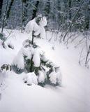 Śnieżysta jodła Zdjęcia Stock