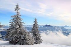 Śnieżysta jodła na zboczu zdjęcia royalty free