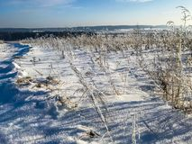 Śnieżysta trawa na polu w pogodnym popołudniu w mrozie Zdjęcie Stock