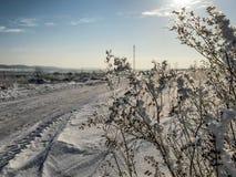 Śnieżysta trawa na polu w pogodnym popołudniu w mrozie Obraz Royalty Free