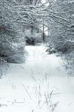 Śnieżyste gałąź stary ogród fotografia royalty free