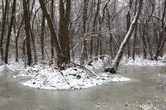 Śnieżysty bagno w wiosna lesie Zdjęcie Stock