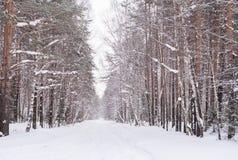 Śnieżysty cofać się w dystansową drogę w zima lesie Fotografia Stock