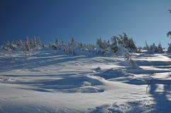Śnieżysty drzewo Obrazy Royalty Free