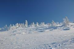 Śnieżysty drzewo Obraz Stock