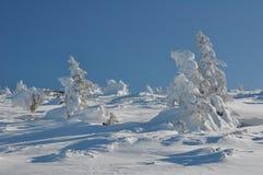 Śnieżysty drzewo Fotografia Stock