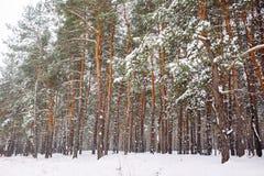 Śnieżysty drzewo przy zmierzchem Zdjęcia Stock