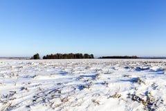 Śnieżysty pole, zima Obrazy Stock