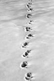 Śniegów ślada Obraz Stock