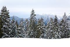 śnieg. Obraz Stock