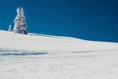 - Śnieg górski drzewo obraz royalty free