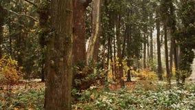 Śnieg i deszcz w jesień parku Zamyka up drzewo Snowing w lasowej naturze i ciszy Zasadza plantatorów na śniegu zdjęcie wideo