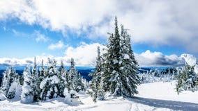Śnieg i głęboki śnieg Zakrywający drzewa pakują w Wysoki Alpejskim fotografia stock