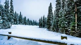 Śnieg i głęboki śnieg Zakrywający drzewa pakują w Wysoki Alpejskim zdjęcie royalty free