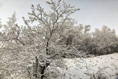 Śnieg i mróz na gałąź drzewa zdjęcie stock
