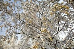 Śnieg i mróz na gałąź drzewa zdjęcia stock