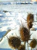 Śnieg i roślina Obraz Stock