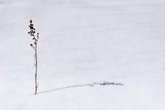 Śnieg jest suchym trawą. Obraz Royalty Free