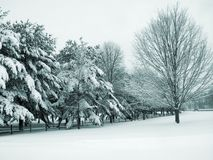 śnieg kraju Fotografia Stock