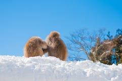 Śnieg małpa Zdjęcia Royalty Free
