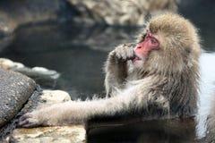 Śnieg małpa, makaka kąpanie w gorącej wiośnie, Nagano prefektura, Japonia Fotografia Royalty Free