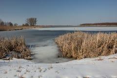 Śnieg na brzeg zamarznięty jezioro i kępie płochy Horyzont i niebieskie niebo zdjęcia royalty free