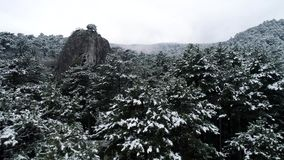 Śnieg na drzewach strzał Odgórny widok na śnieżystych świerkowych lasowych Ciemnych iglastych lasach Borealny iglasty las zbiory wideo