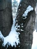 Śnieg na gałąź i barkentynie zdjęcia royalty free