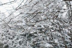Śnieg na gałąź podczas gdy snowing Zdjęcia Stock