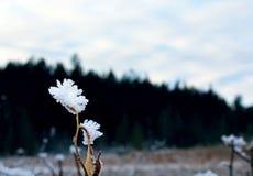 Śnieg na roślinie Obraz Royalty Free