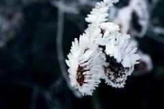 Śnieg na roślinie Obrazy Stock