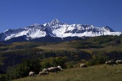 Śnieg Nakrywać góry Kolorado i Pastwiskowi Sheepin południowi zachody Fotografia Royalty Free