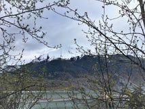 Śnieg Nakrywająca góra przez gałąź obraz royalty free