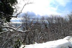Śnieg przed bożymi narodzeniami Fotografia Stock